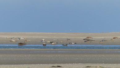 phoques sur banc de sable